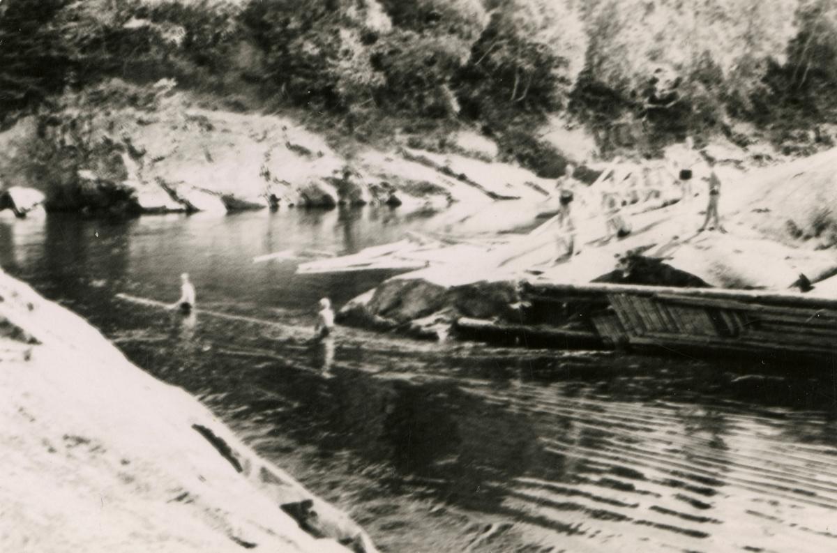 Swimming in the river Lågen