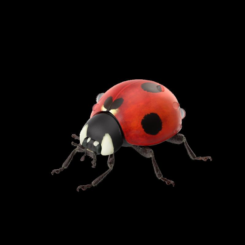 Ladybug_With_Water_Droplets.G11.2k.png