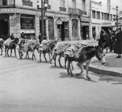 Tegeltransport med fyrbenta åsnor. Bogotá i juli 1935