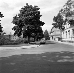 Bilder från området kring Bünsowska tjärn tagna från Södra o