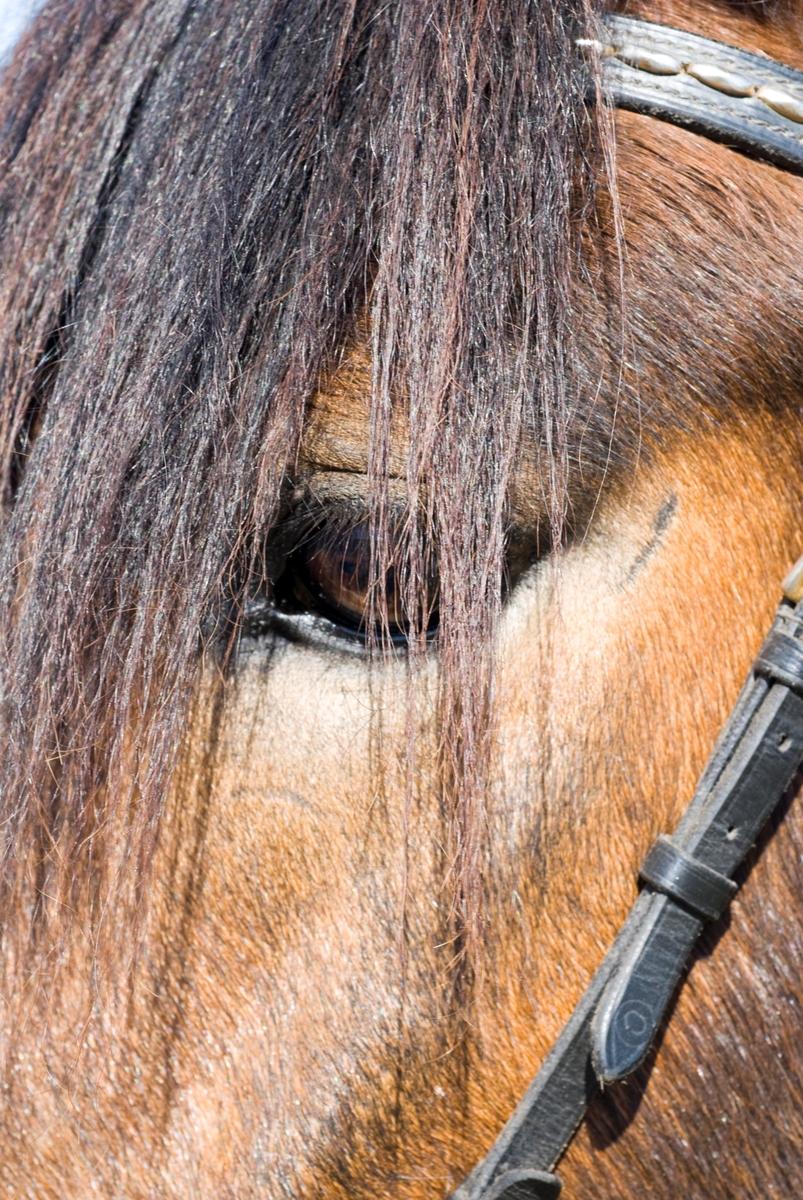 Øye på hest