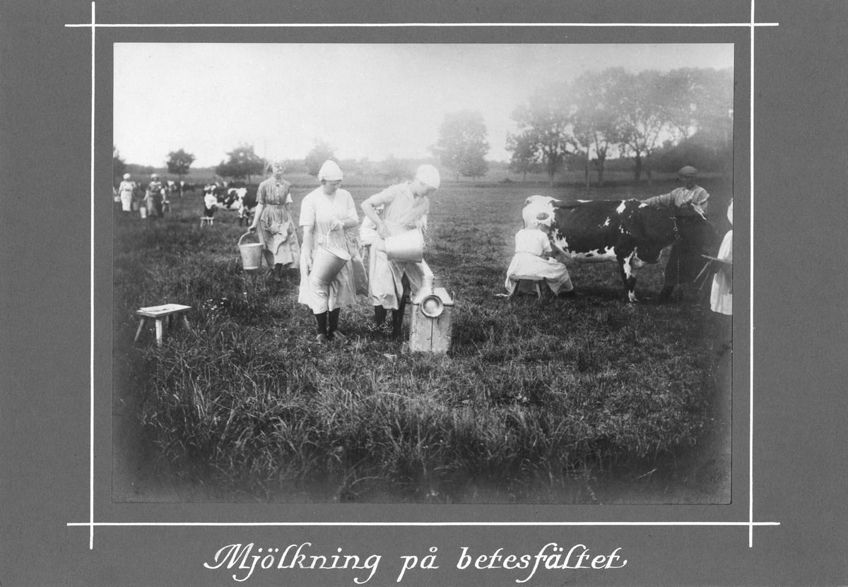 Mjölkning på betesfältet, Röda Stjärnans första kurs i allmän djurvård 1917.