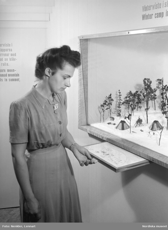 Vistemodell med utdragbar textskiva; fjällapskt vinterviste. En kvinna betraktar modellen. Miljö från Lapska avdelningen på Nordiska museet. Skådesamlingens nymontering från 1947.