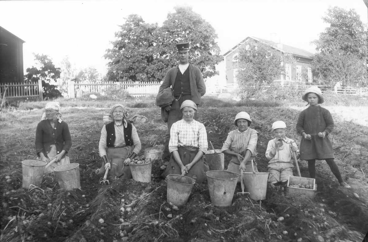 """Potatisupptagning på """"Hampgärdet"""" vid Per-Jöns. Från vänster: okänd, """"moster Karin"""" Nilsson, född 1843, Lenninge 1:3, Anna Edh, född 1900, Lenninge 5:25, Wilhelm Edh, född 1895, Lenninge 5:25, okänd, Gösta Persson, född 1908, Voxsätter 5:3 och Elsa Persson, född 1909, Voxsätter 2:3."""