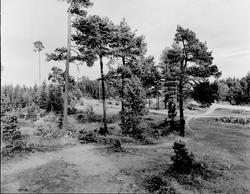 Tolvforsheden blivande Skogskyrkogården som invigdes 1929