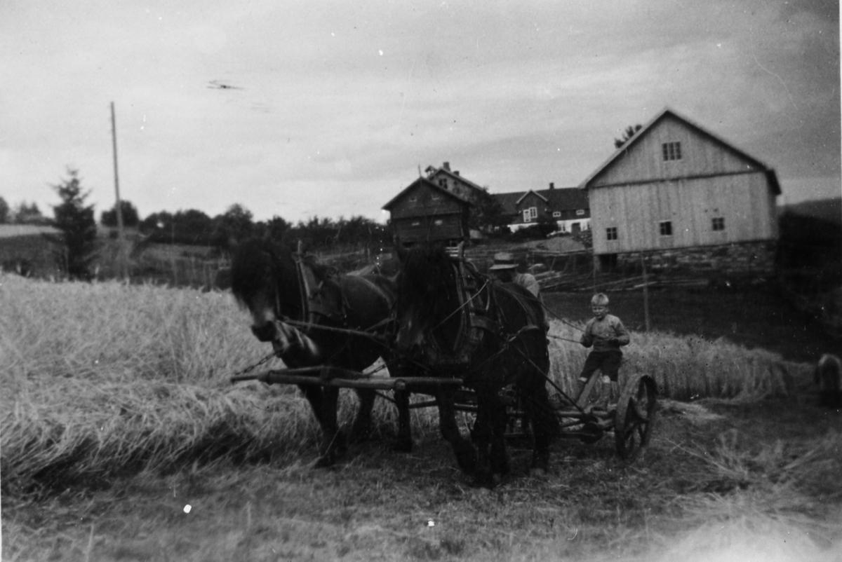 Slåmaskin med håndavlegger trukket av to hester. Han Gjefsen kjører. Gården Gjefsen i bakgrunnen.