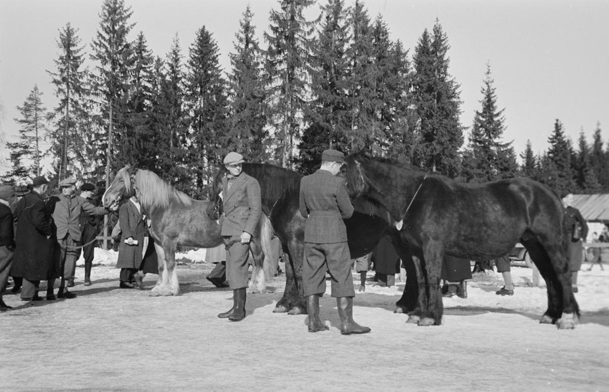 Husdyrutstilling, fesjå, hesteutstilling på Greveløkka i Hamar. Arrangementet ble fra gammelt av holdt på Utstillingsplassen, men under krigsårene la okkupantene beslag på stedet med brakkebebyggelsen sin. Utstillingen ble holdt på Greveløkka til 1948.  Se NO-24635-01 til NO-24635-35.
