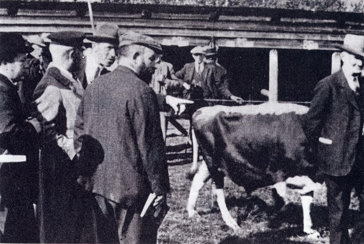Statskonsulent Chr. Wriedt fylgjer døminga i 1925