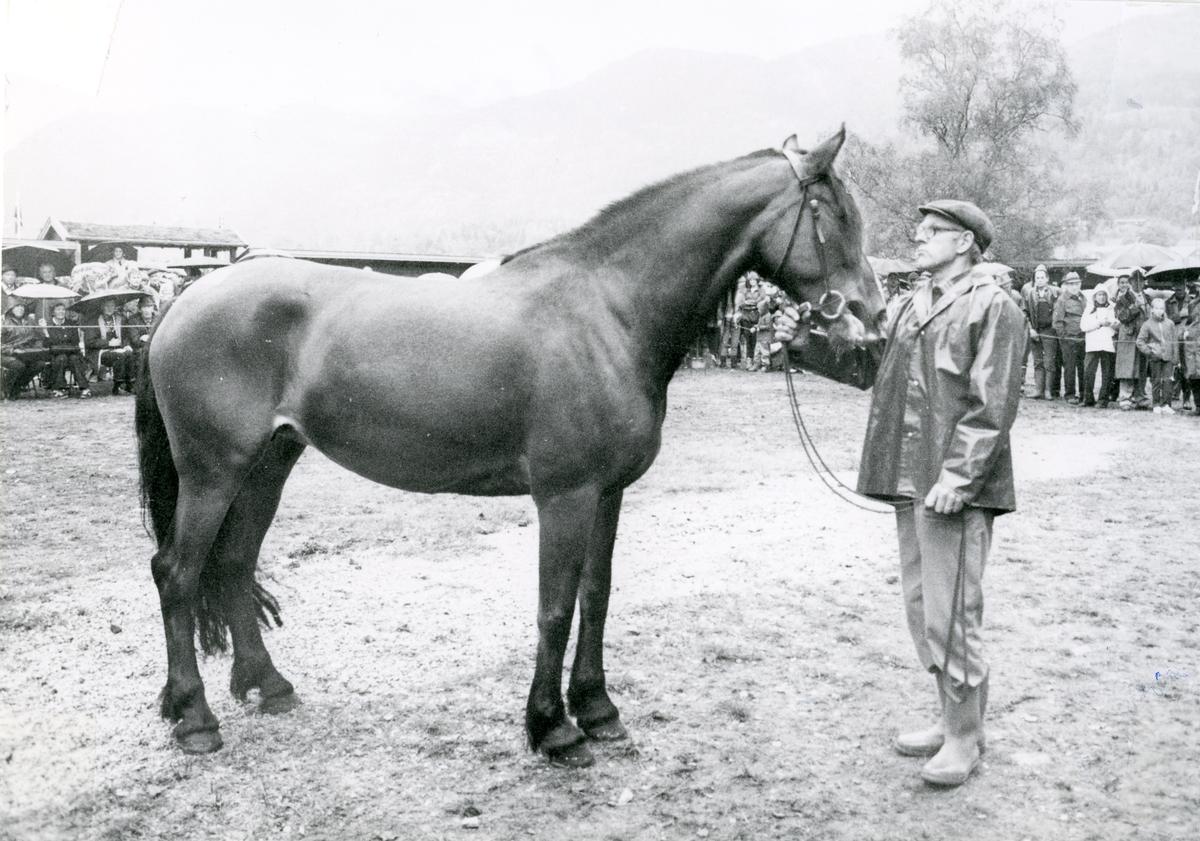 Leif Bergan mønstrar hest.