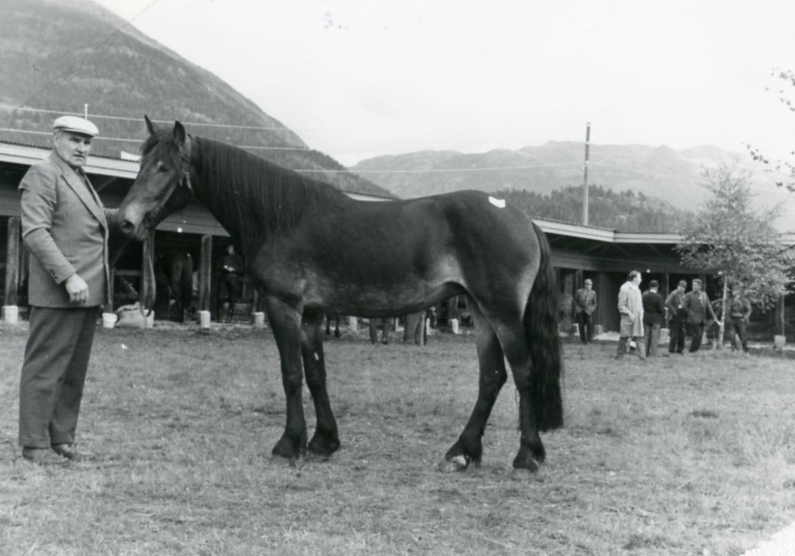 Mønstring av hesten Telelyna (46).