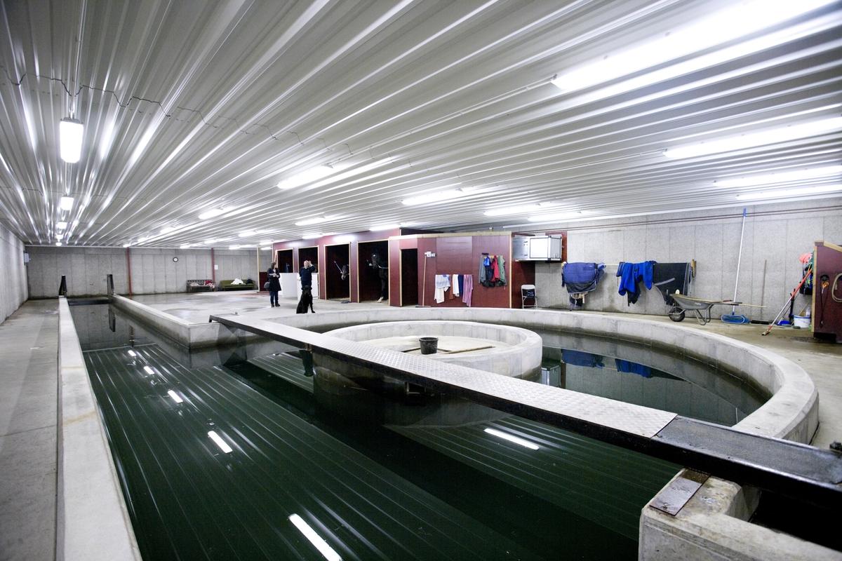 Svømme- og rehabilieringssenter for hest. Svømmebasseng.