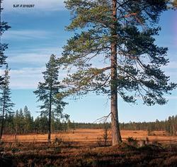 Myrlandskap fra Slemdalen Nordre Osen i Åmot kommune i Hedma