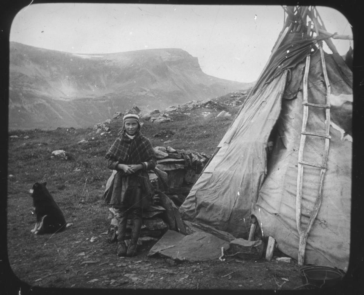 """""""Troms fylke. Serie 111. No. 6"""" står det på glassplaten. Portrett av en ung samisk jente i samekofte med samisk sjal over skuldrene. Hun har kommager på beina og det ser også ut som hun har på seg bukser av skinn.  Hun står ved siden av sommerteltet. I teltsprekken (inngangen) titter et lite ansikt ut på fotografen. En provisorisk stige står lent mot teltduken. Sameteltet er plassert i et fjellandskap med høye fjellmassiver i bakgrunnen. En hund (trekkhund eller gjeterhund?) sitter til venstre for jenta. Bak jenta er det stablet opp et forråd med steiner på toppen, muligens er det mat som er lagret i steinmuren. Bildeserien av botaniker Hanna Resvoll-Holmsen er fra Nordland, Troms og Finnmark. Vi vet at hun tilbrakte endel tid i Lebesby, Finnmark, i 1909. Fotoserien er sannsynligvis tatt på reisen nordover og i Øst-Finnmark. Botaniker Hanna Resvoll Holmsen fikk et reisestipend fra Universitetet i Oslo for å kartlegge arktisk vegetasjon i 1909. To foredrag om en ekspedisjon til Svalbard i 1907 ga grunnlag for et reisestipendet fra Oslo Universitet til Øst-Finnmark i 1909. Hanna Resvoll-Holmsens Svalbardekspedisjon kom i stand med støtte fra fyrsten av Monaco, som ville gi ut en bok om Svalbard. Hanna gikk alene i land på Svalbard i juli 1907 og tilbrakte en måned i telt, med gevær og utstyr for innsamling og preservering av planter. Studiene på Svalbard ble senere publisert med overskriften """"Observations botaniques"""" og utgitt i Monaco.  Hanna Resvoll Holmsen regnes også som pioner innen fargefotografi, de tidligste fra før 1910, blant annet fra Svalbard."""