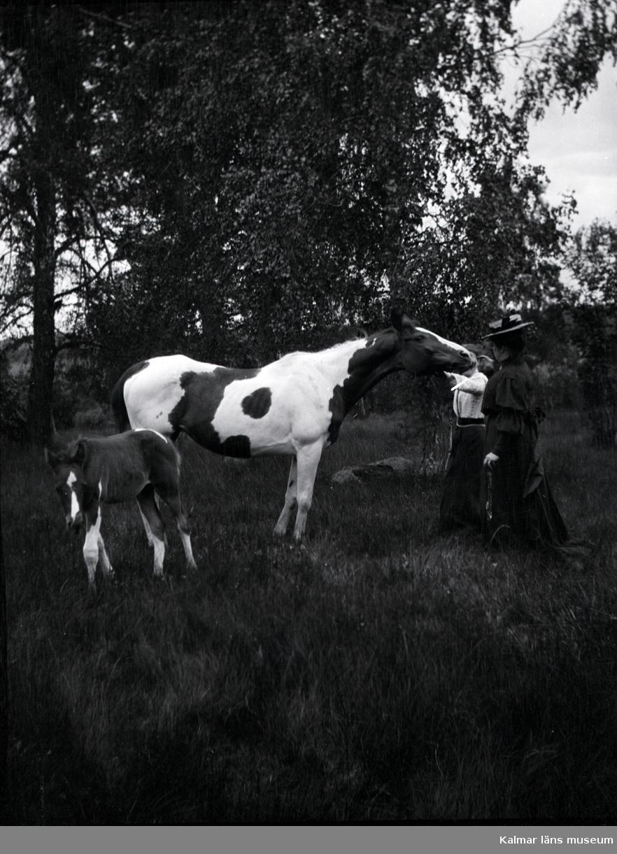 Två damer med en häst och ett föl.