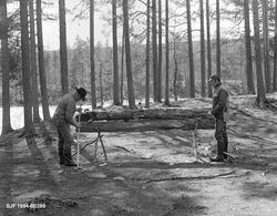 Brennende nying ved Stenbekkoia ved Femundselva i Engerdal i