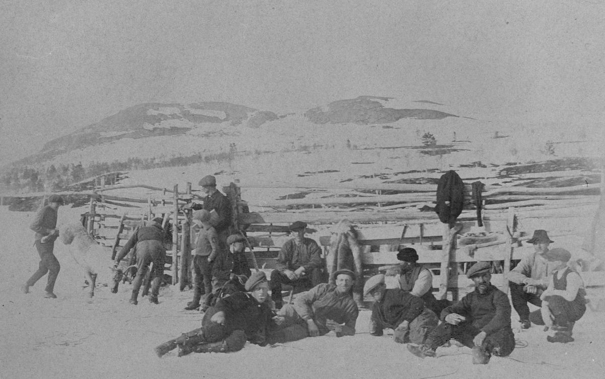 Arbeide ved reingjerde på Stormyra, Røros 1920