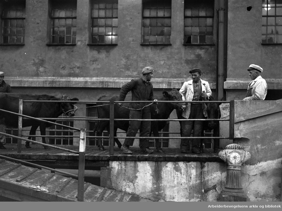 Oslo Kjøtthall på Grønland, november 1949.