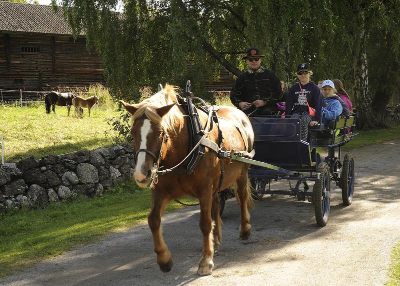 Rødbrun hest med hvitt bliss trekker en kjerre med mennesker i. (Foto/Photo)