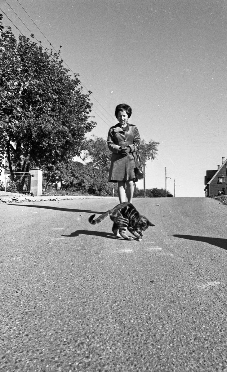 Svart katt. Katt som krysser veien for å få seg litt mat. Kvinne i bakgrunnen.