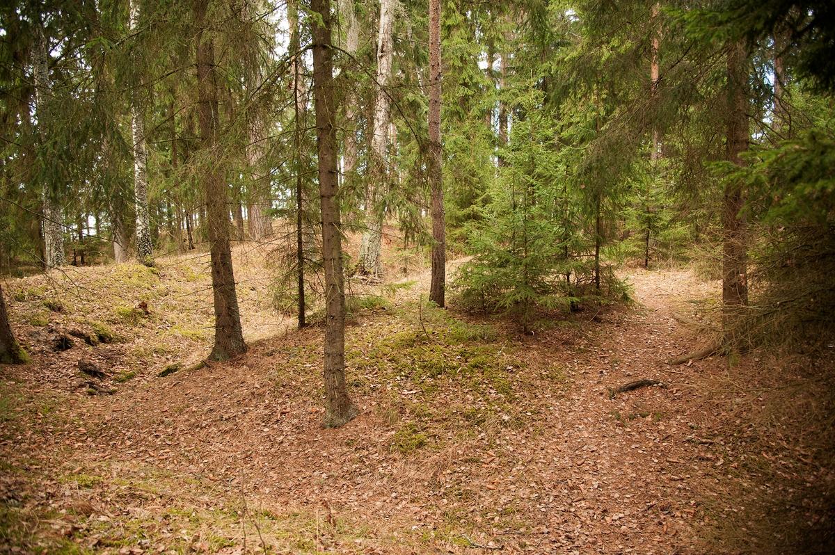 Hovinsholm, Helgøya, Hedmark. Tydelige spor det som kan ha vært et forsvarsanlegg fra vikingtida.