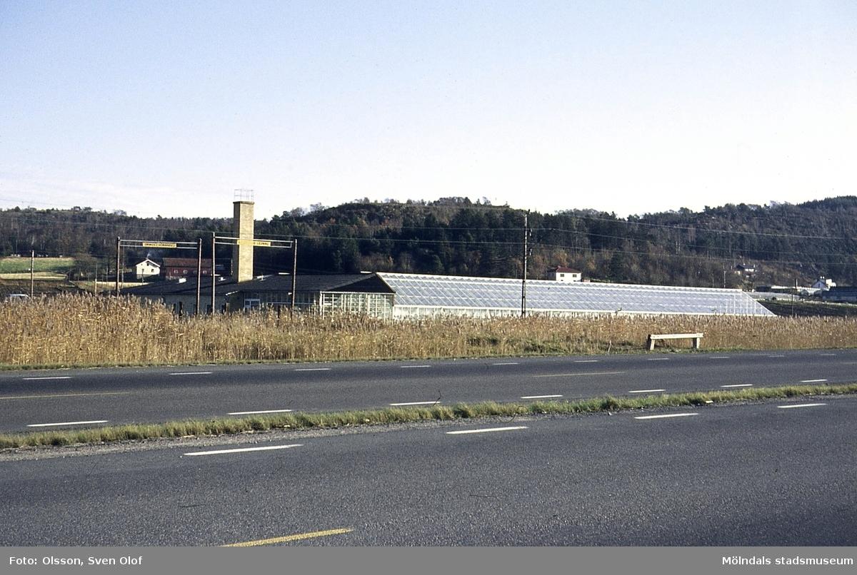 Kommunens växthus vid Kärra bro i Mölndal, år 1970. I bakgrunden ses Rävekärr och Sandbäck.