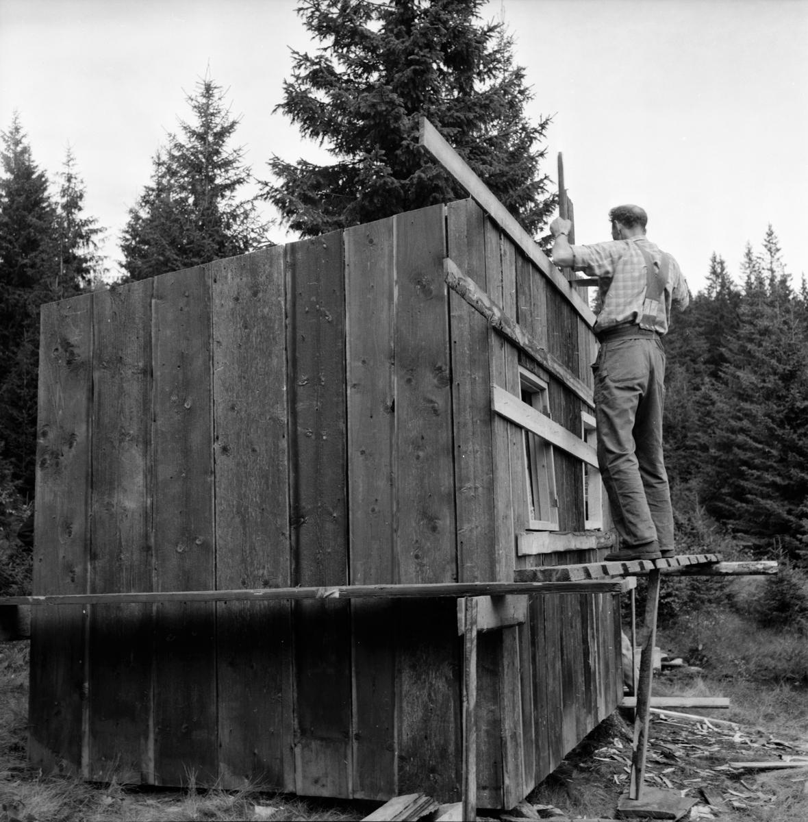 Alfta frisksportares stuga i Malviksbo. 9/9-1962