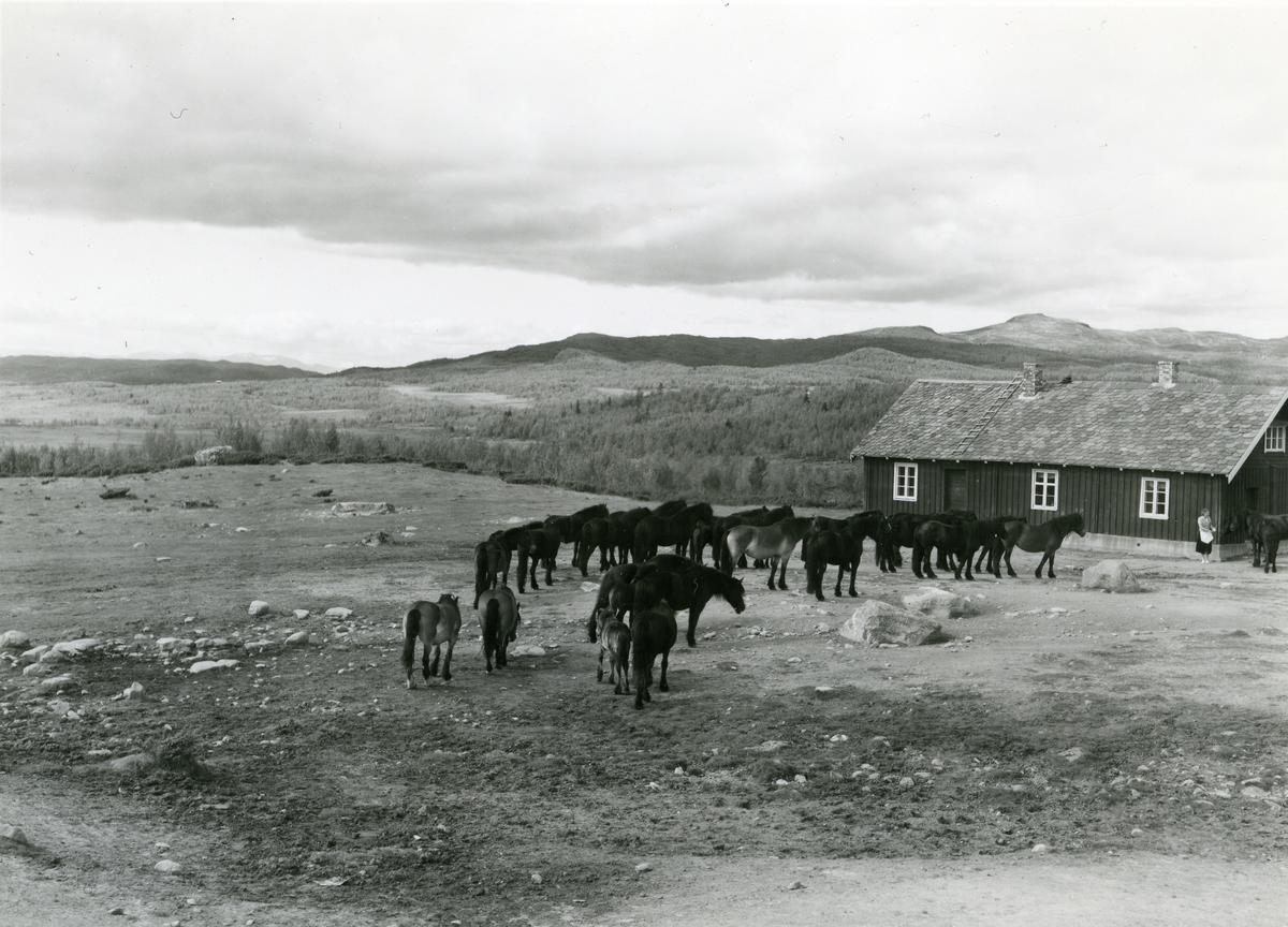 Hestefølge på Lenningen, Valdres.