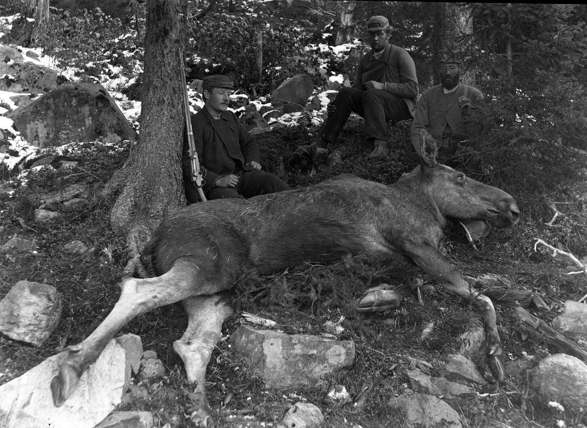 To menn med skutt elg