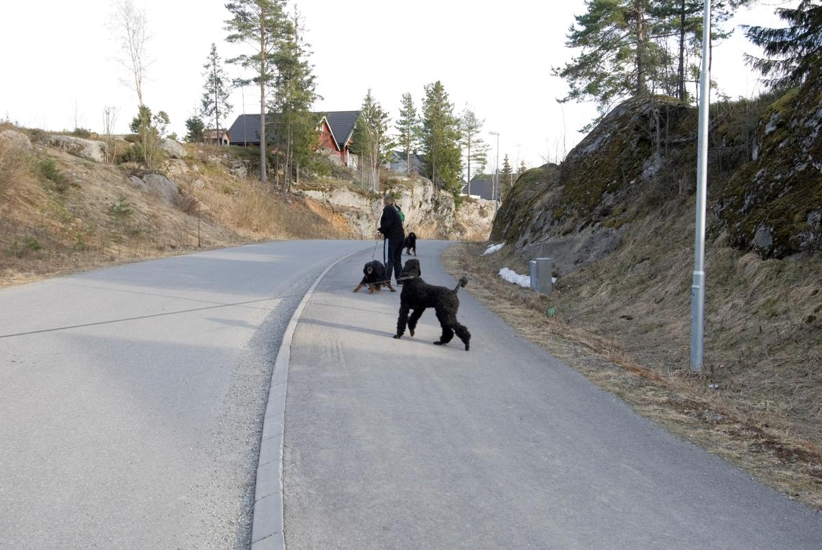 Hunden Pedro på tur hilser på noen andre hunder.