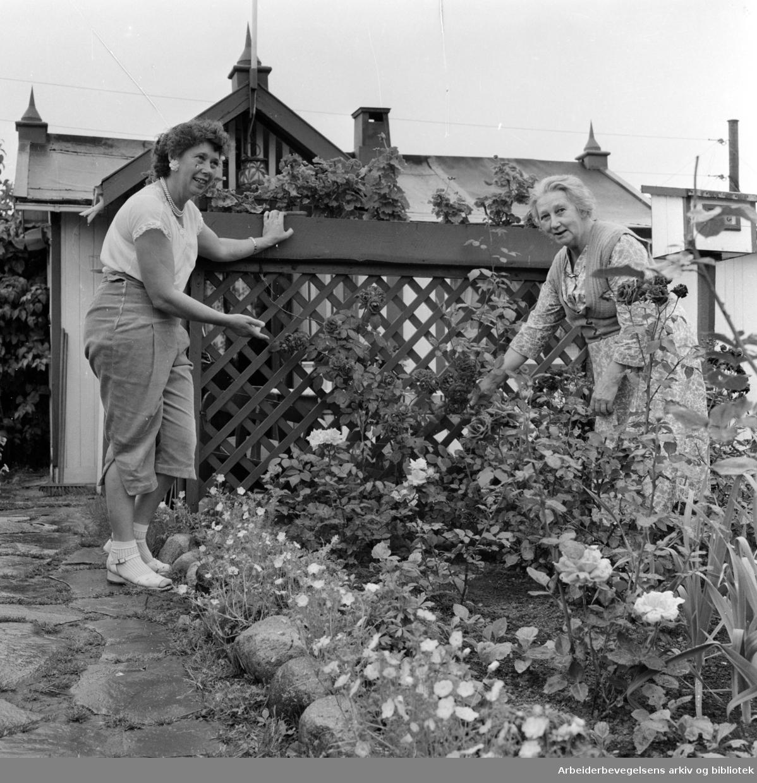 Rodeløkka Kolonihage. Ester Johnsen og fru Johansson viser oss rundt. Juli 1957