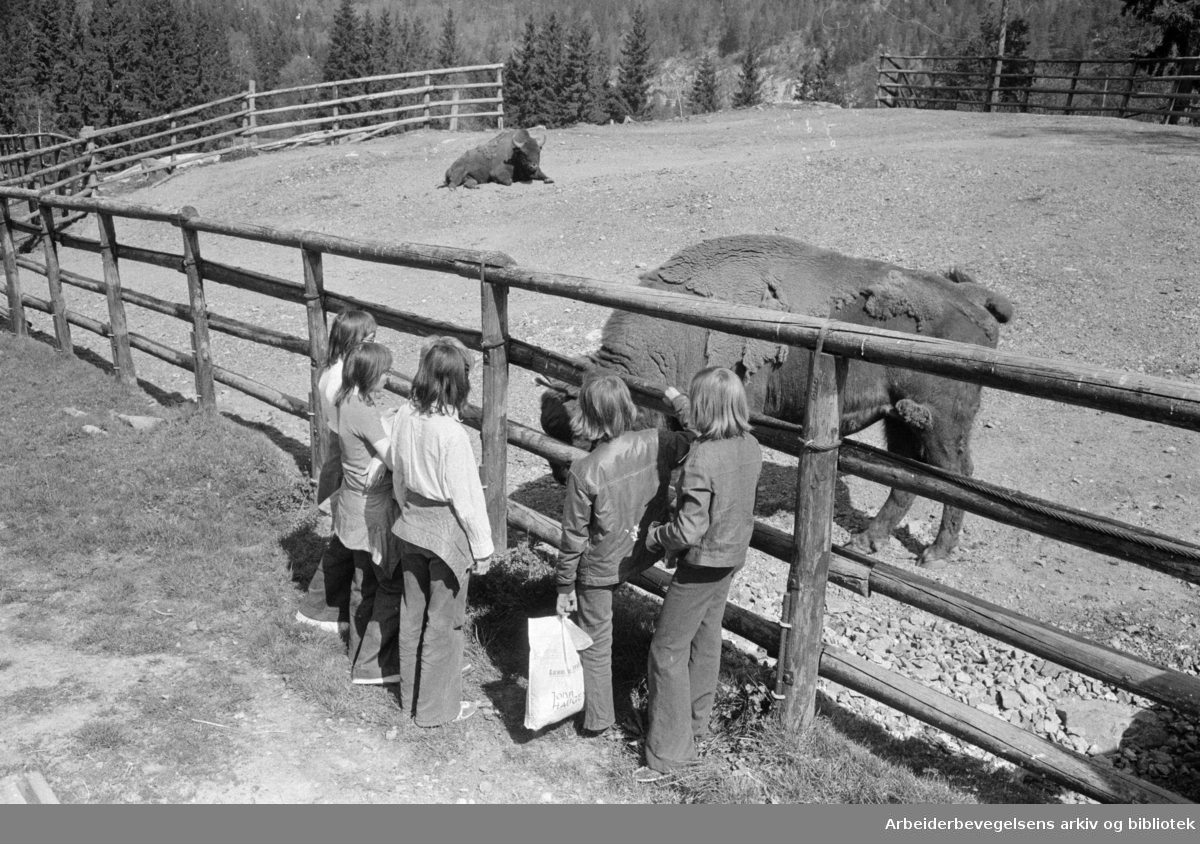 Mosseveien: Fornebo Dyrepark åpnet for sesongen..Mai 1974