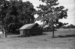 Ei gammel tømret stue ved noen store trær. Stedet er ikke id