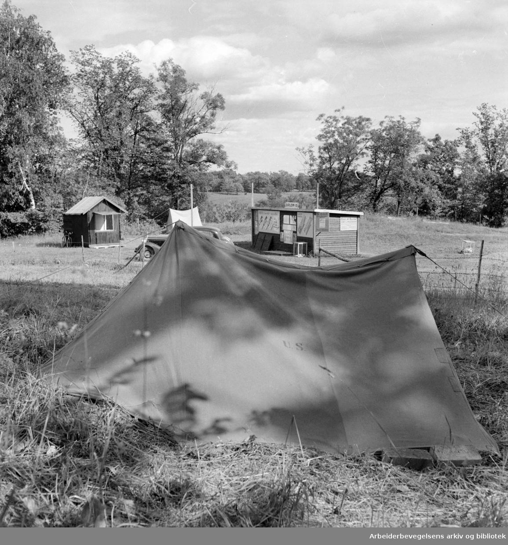 Hoff. Teltleir. 1950