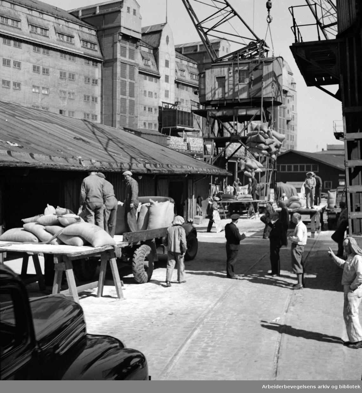 Havna. Bryggearbeidere, lasting og lossing. Mai 1946.