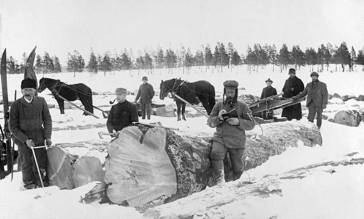 Tømmermåling på Femundsjøen vinteren 1905.  I forgrunnen er tre målere i virksomhet.  Helt til venstre står en mann (som likner daværende skogdirektør Michael Saxlund) med en skyveklave som er strukket til det ytterste.  Til høyre for ham er en påslager i ferd med tobakkspipe i munnen i ferd med å slå et kjøpermerke inn i stokken.  Til høyre står en mann som fører de registrerte målene inn i ei merkerbok.  Bakenfor står to hester, tre karer og en guttunge og betrakter det hele.  Hestene er forspent rustninger uten last, hvor geita er lagt oppå bukken.  Bak mannen med klaven er det reist flere skipar i snøen. Stokkene på fotografiet har svære dimensjoner.  Den største skal ifølge påskrift være ei gran med rotdiameter 148 centimeter.  Dette fotografiet er brukt i Norsk Skogmuseums utstilling Tid for Skog [2001]. Femunden. Femundsmarka.   Fotografiet er tatt i forbindelse med de store Femundsdriftene i åra 1904-1905, da den statlige skogetaten solgte hogstrettigheter til store mengder gammelskog i Femundstraktene.  I 1904 ble det blinket 11 102 tylfter (133 224 trær) i den grove gammelskogen i den nordre delen av daværende Rendalen statsallmenning.  Den blinkete skogen ble solgt på rot til norske kjøpere, i hovedsak til selskapet Kiær & Mathiesen Ltd., en allianse mellom to trelastaktører som ble etablert med sikte på dette prosjektet.  Mesteparten av tømmeret som ble avvirket her vinteren 1904-1905 ble kjørt på snøføre til innsjøen Femund for videre fløting derfra. Bare et lite parti ble transportert til innsjøen Galten for fløting på Klara med videre overføring til Grøna og Mistra.  På disse innsjøene ble tømmeret målt og merket før isløsningen.  På grunn av den lange avstanden til markedene, med besværlige fløtingsvassdrag som transportårer, var det bare rotstokkene som tatt hand om, mens toppstokkene ble liggende i skogen og råtne.  Sjøl om det altså bare var det mest verdifulle tømmeret det ble kostet fløting på, gikk mange av uthogstprosjektene med underskudd.  M