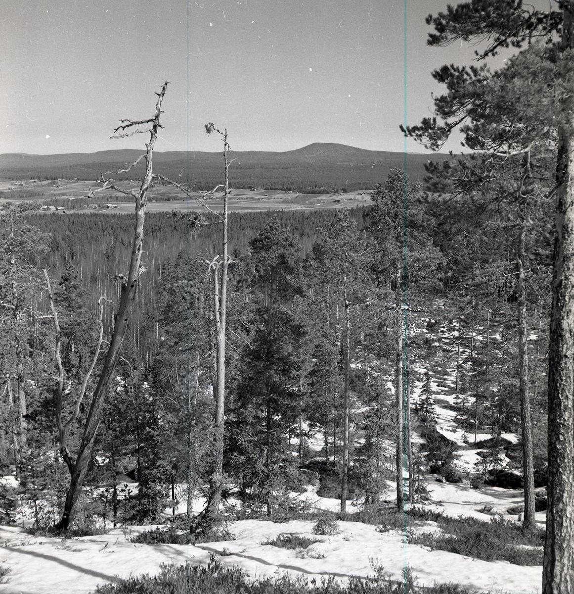 Utsikt från Skogsberget mot Höleklack med torraktallar i förgrunden, april 1951.