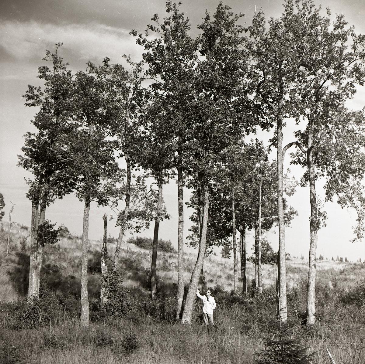 En man står vid en trädgrupp på Hocken, september 1961.