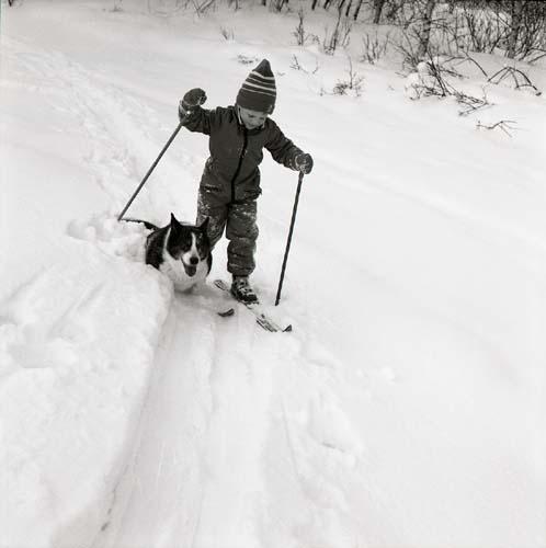 Ett barn åker längdskidor i några längdspår medan en hund kommer från sidan in i spåret, 1984.