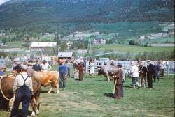 Oksar stilte på Ånstadøya   F.v.: Gragutt Lien, Lykkling og
