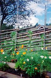 Gammal bönsort i Häradsudden, Mälby, Söderön, Börstils socke