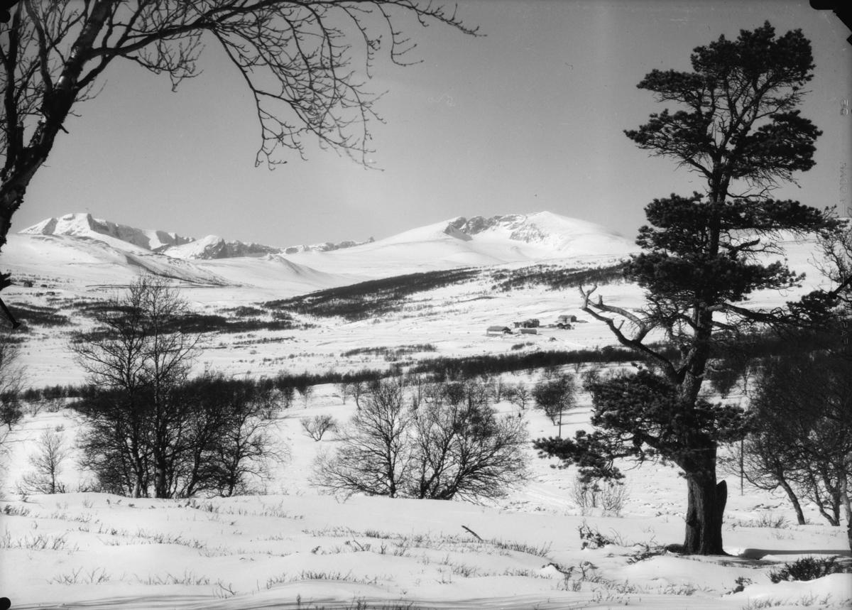 Dovrefjell, utsikt fra Folldalsvegen mot fra venstre Svånåtindan og Snøhetta med Hjerkinn Fjellstue