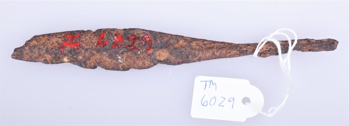 Pilespissen har tange som går jevnt over i bladet og rygg på midten på begge sider