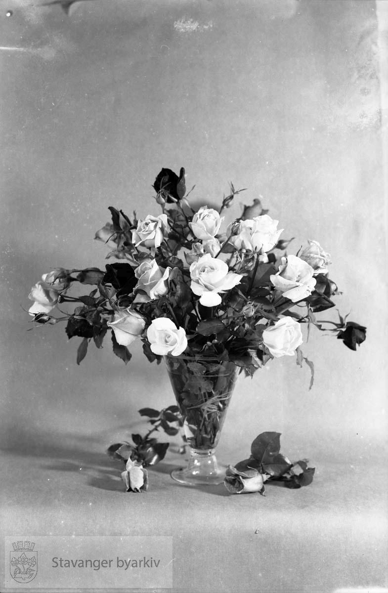Gartner Brynes roser