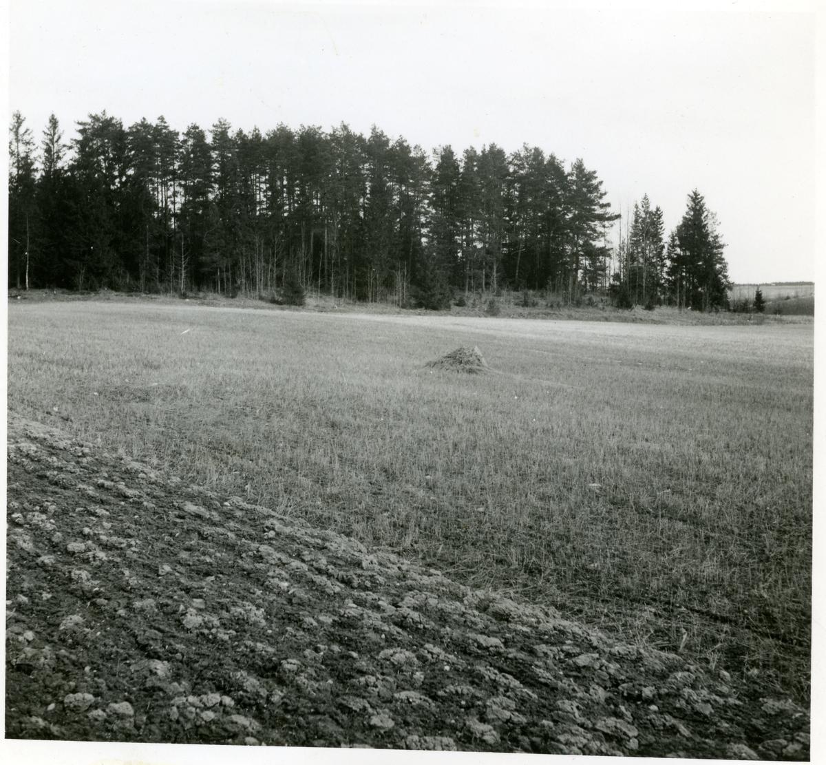 Hubbo sn, Fågelbacken. Åker i fornlämningsområde vid Fågelbacken, 1938.