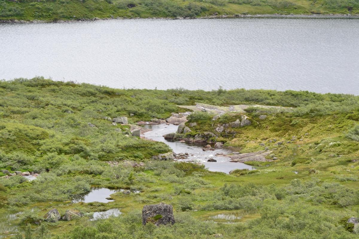 Asbjørn Haga og Aina Gjesdal med hunder på tur ein veke ved Lykkjevatnet i Langeidshei for å sjå til sauene og feriera. Dei overnatta i Lykkjehytta, tilhøyrande Jæren Smalalag.