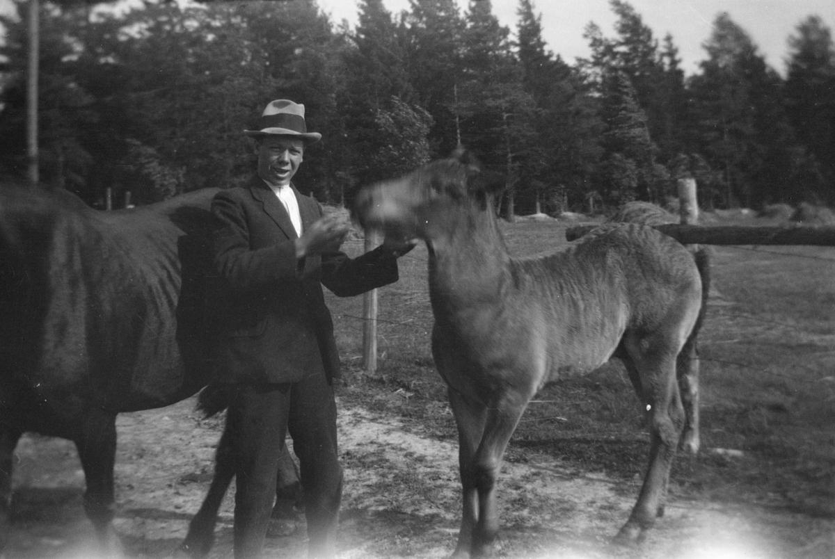 Mann med to hester