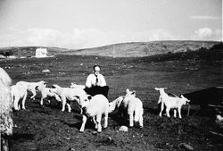 Martin N. Kverneland i lammeflokken. I bakgrunnen det første