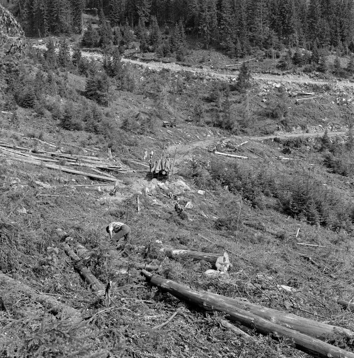 Skogbruksaktivitet slik den ble praktisert mange steder i Norge i 1960-åra. Vi har ikke eksakt informasjon om hvor eller når dette fotografiet ble tatt. Det er fra ei hogstflate i ei li der alle trær er felt, kvistet og kappet med motorsag. I forgrunnen sto en mann med dongeribukse og rutete bomullskjorte bøyde over en tømmerstokk som lå i baret, og som han muligens skulle barke. Manuell barking var for øvrig en aktivitet som var under utfasing i 1960-åra – stadig mer virke ble hentet ubarket ved de nye skogsbilvegene med traktorer eller lastebiler, og også fløtingsforeningene begynte å gjøre forsøk med ubarket virke. Noe lengre nede i lia, ved enden av en såkalt «samleveg», en sideveg til en «adkomstveg», gjorde det mulig å frakte tømmer på hjul fra driftsstedene i skogen til det offentlige vegnettet. I dette tilfellet er tømmerlasset fotografert bakfra, så vi ser ikke hvilken trekkraft som ble brukt. I 1960 ble hest fortsatt ansett for å være det rimeligste transportmiddelet over korte avstander i skogen, men på vegene var lastebilen det prisgunstigste alternativet. Enkelte skogeiere, som hadde jordbrukstraktor, valgte likevel å bruke den for å få tømmeret fram til velteplasser der det var hensiktsmessig å få det over på lastebil. Vegbygging var en sentral aktivitet i norsk skogbruk de første tre tiåra etter 2. verdenskrig. Det var viktig å legge an arbeidet slik at man i størst mulig utstrekning fikk utnyttet skogens produksjonsevne med den nye driftsteknologien som vant innpass i den samme perioden. Under planlegginga av skogsbilveger var det et viktig premiss at anleggsomkostningene skulle vurderes i forhold til antatt transportgevinst, som igjen var avhengig av avvirkningskvantumet i vegenes nærområder i overskuelig framtid. Det var åpenbart at anleggskostnadene ville variere etter hvilken kvalitet vegen skulle få, etter hvordan terrenget var og etter hva slags mark den skulle legges på. Billigst var det å legge vegene der det var bæredyktige løsmasser. Morene