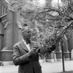 Sten Andersson, stadsträdgårdsmästare i Sundsvall, invid GA-
