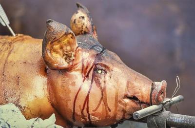 Helstekt gris med marinade rennende over ansiktet.. Foto/Photo